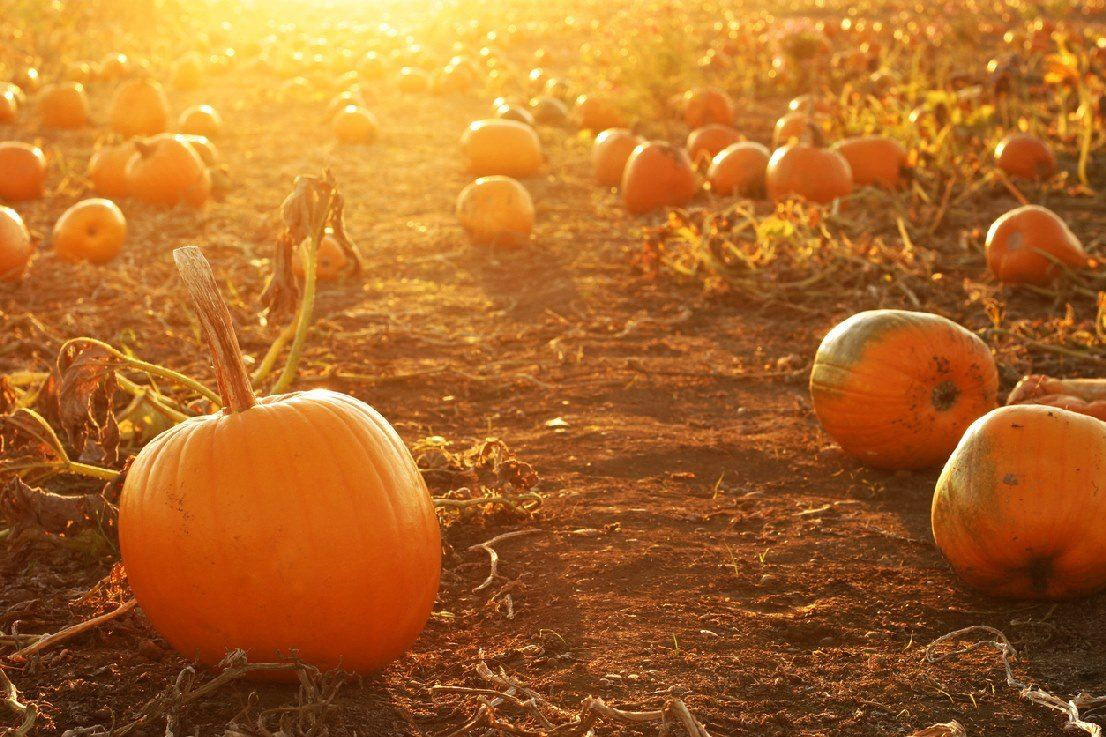 pumpkins-setting-sun2
