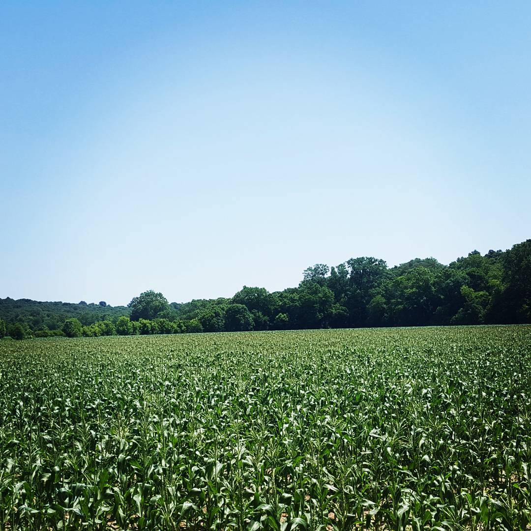 sweet corn fields, missouri